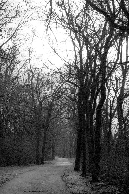 SS - Haunting Path.jpg
