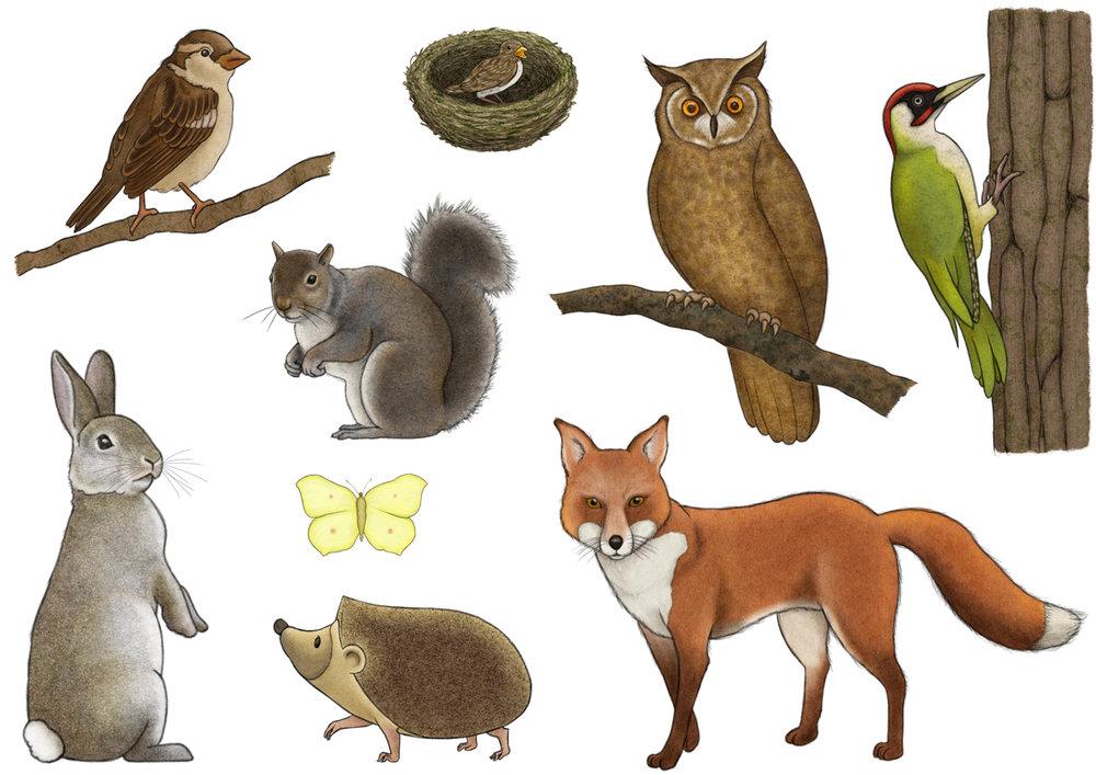 Field Guide Wildlife