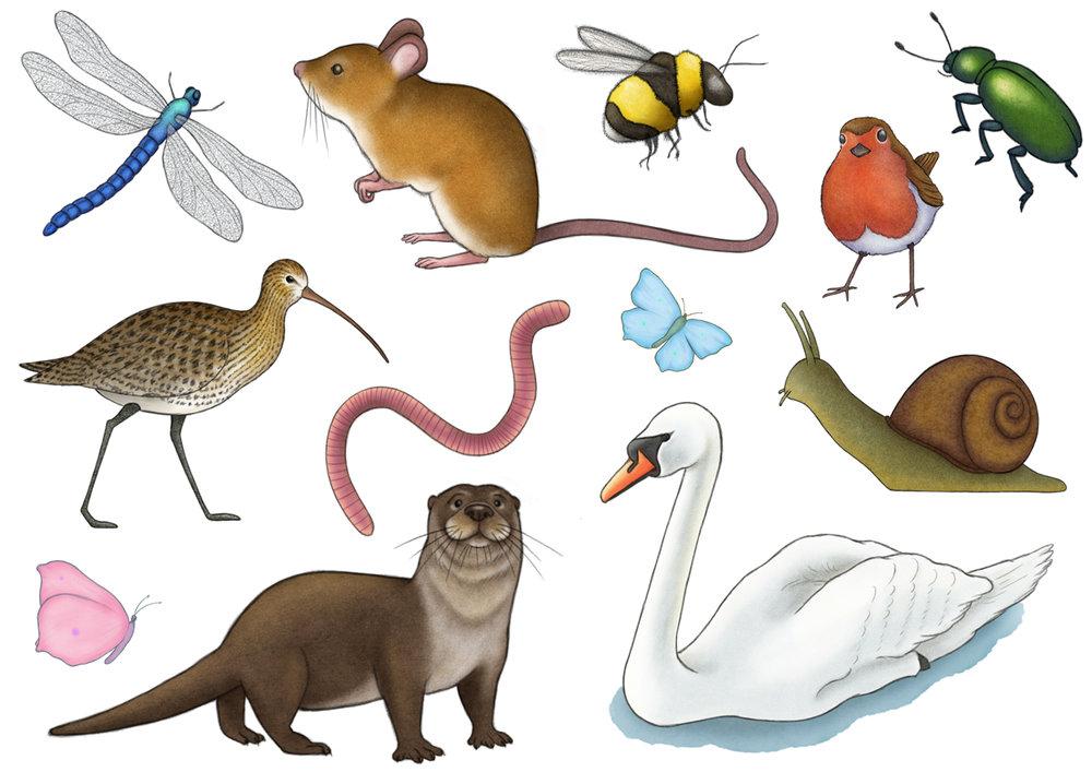 Explorer's Journal Wildlife