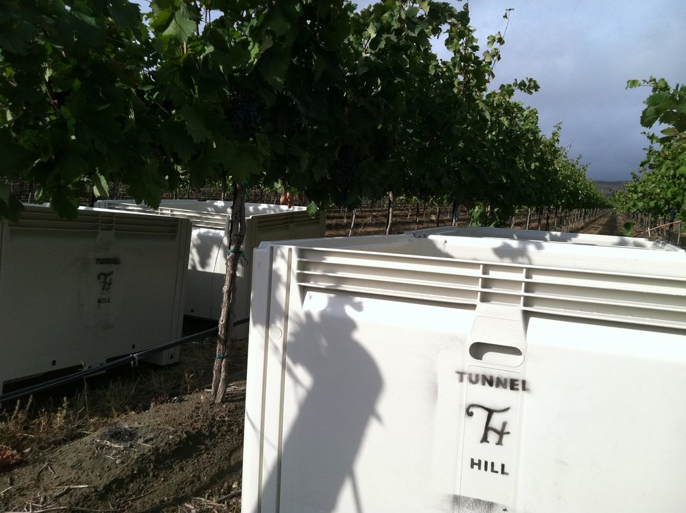 bins in vineyard.jpg
