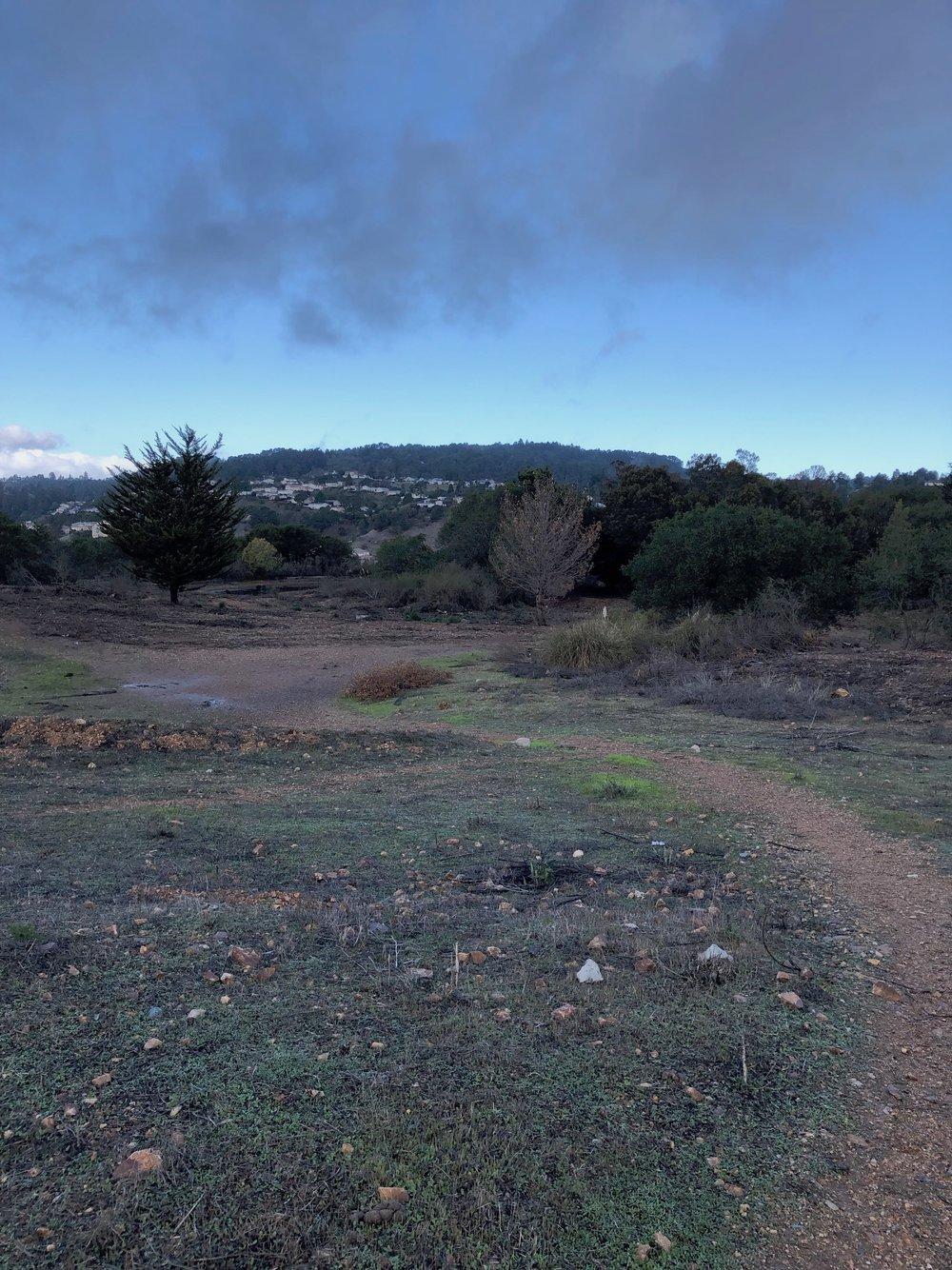 cleared land.jpeg