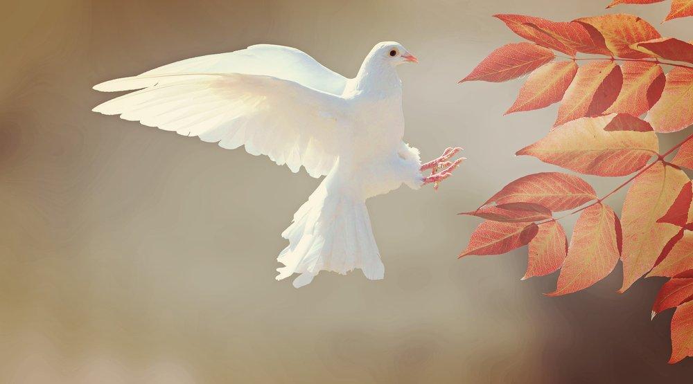 dove-2516641_1920.jpg