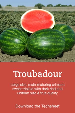 Troubadour-Hero.png