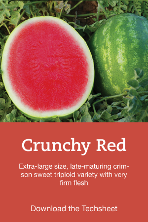 Crunchy-Red-Hero.png