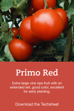 Primo-Red-Hero.png