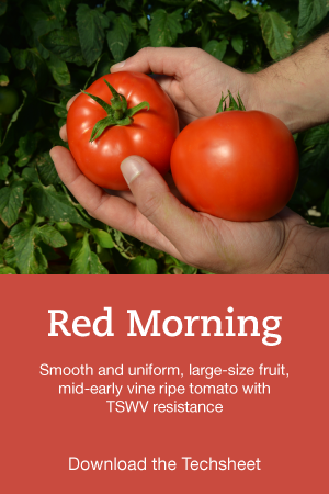 Red-Morning-Hero.png