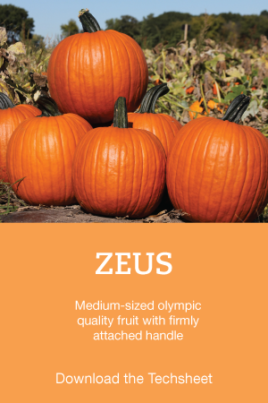 Zeus-Pumpkin-Hero.png