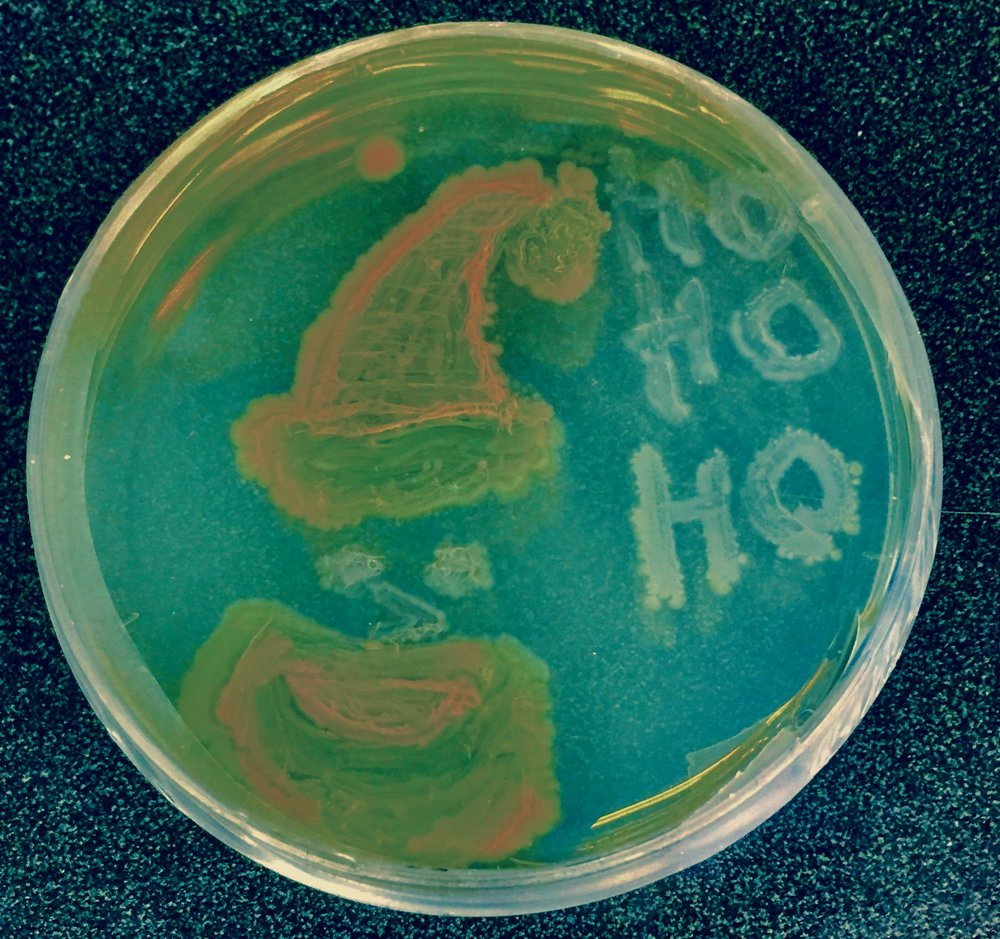 Microbiology at Christmas