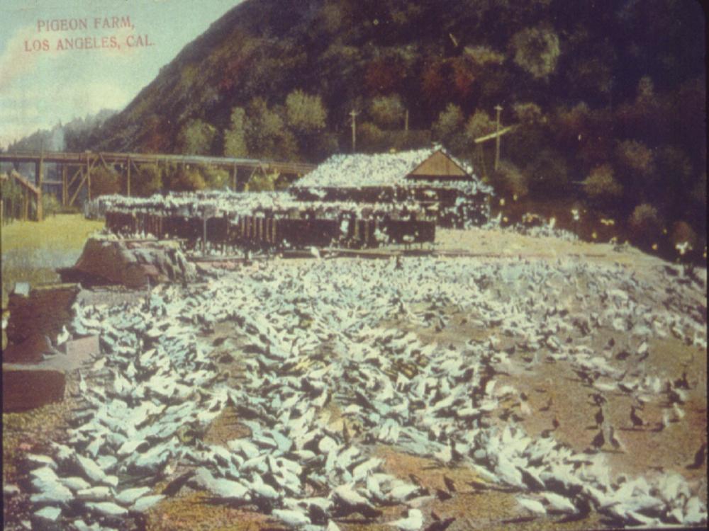 Pigeon Farm.png
