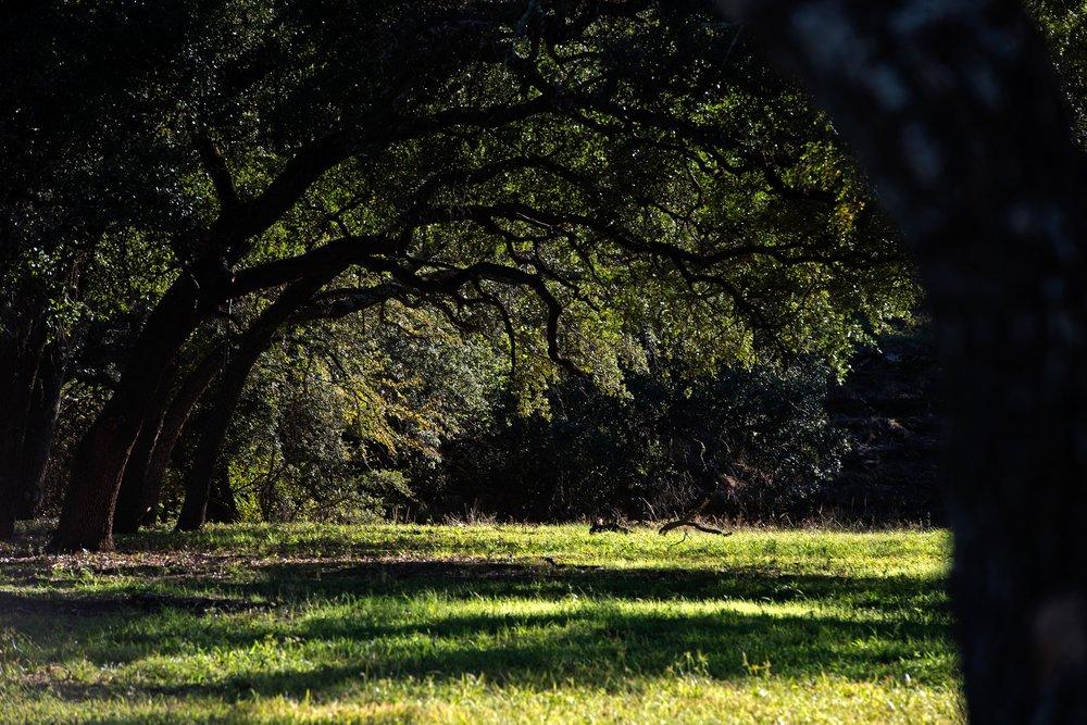Cow Valley Creek-26.jpg