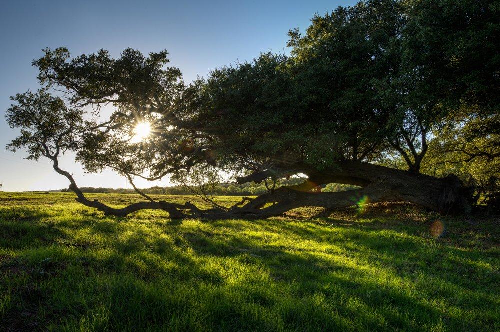 Cow Valley Creek-16.jpg