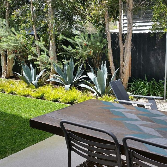 Venice beach growing in... #groundswell #groundswelland #landscapearchitecture #landscape #venice #agave