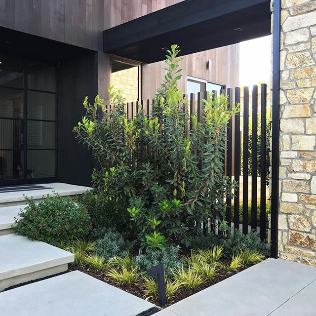 Front entry and planting at a recent project in Mar Vista #groundswelland #marvista #losangeles #landscape #landscapedesign #glass #aluminumpickets architecture- @yu2e_inc