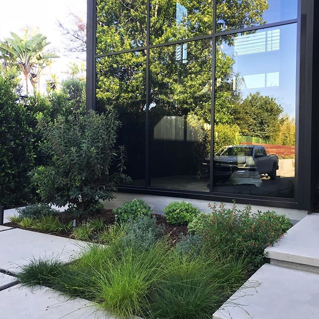 Front entry and planting at a recent project in Mar Vista #groundswelland #marvista #losangeles #landscape #landscapedesign #glass architecture- @yu2e_inc