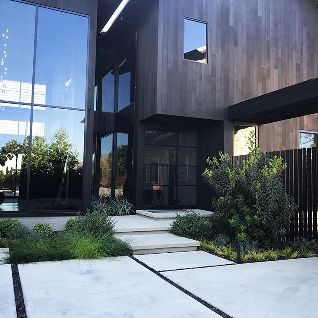 Front entry and planting at a recent project in Mar Vista #groundswelland #marvista #arbutus #losangeles #landscape #landscapedesign #glass architecture- @yu2e_inc