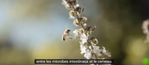 pat et abeille- green renaissance.JPG