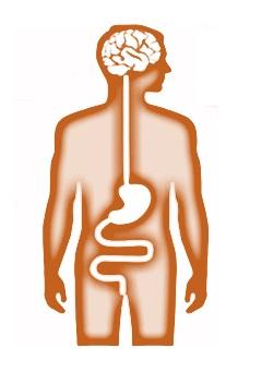 cerveau intestins.jpg