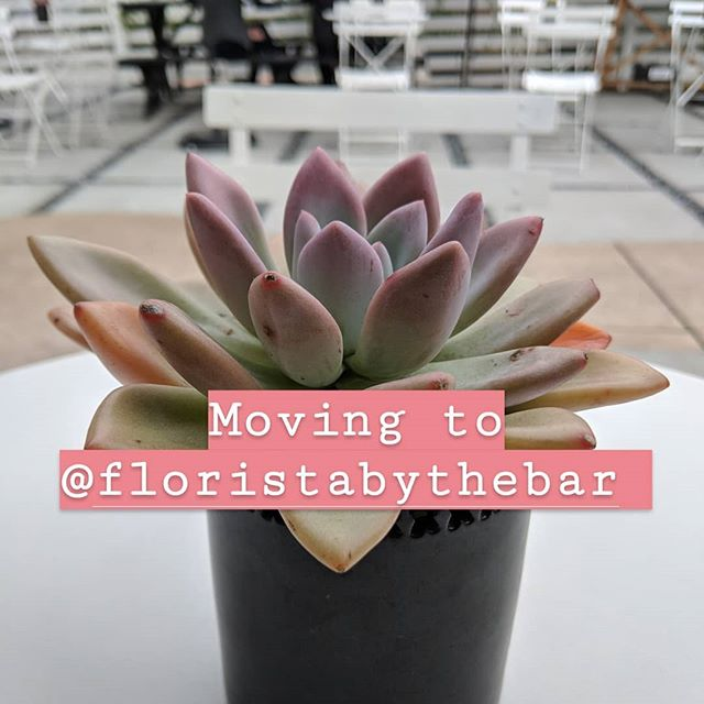 To streamline things and life, I'm archiving/moving content over to @floristabythebar. ☕🌺😎. When that's done, so is this account. So feel free to hop on over and follow me on my personal account if you haven't already done so. 💜.