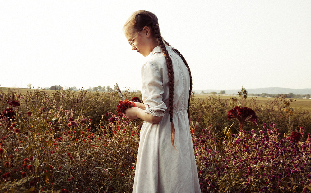 Mennonite Girl Cutting Wildflowers For Her Grandmother's Weekly Market