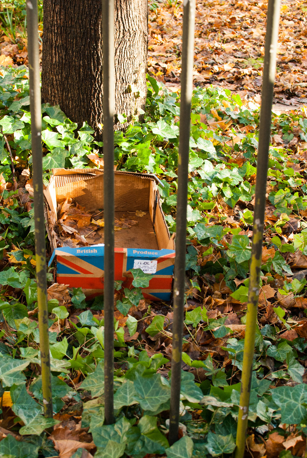 Georgina_cook_Heygate_estate_british_produce_box.jpg