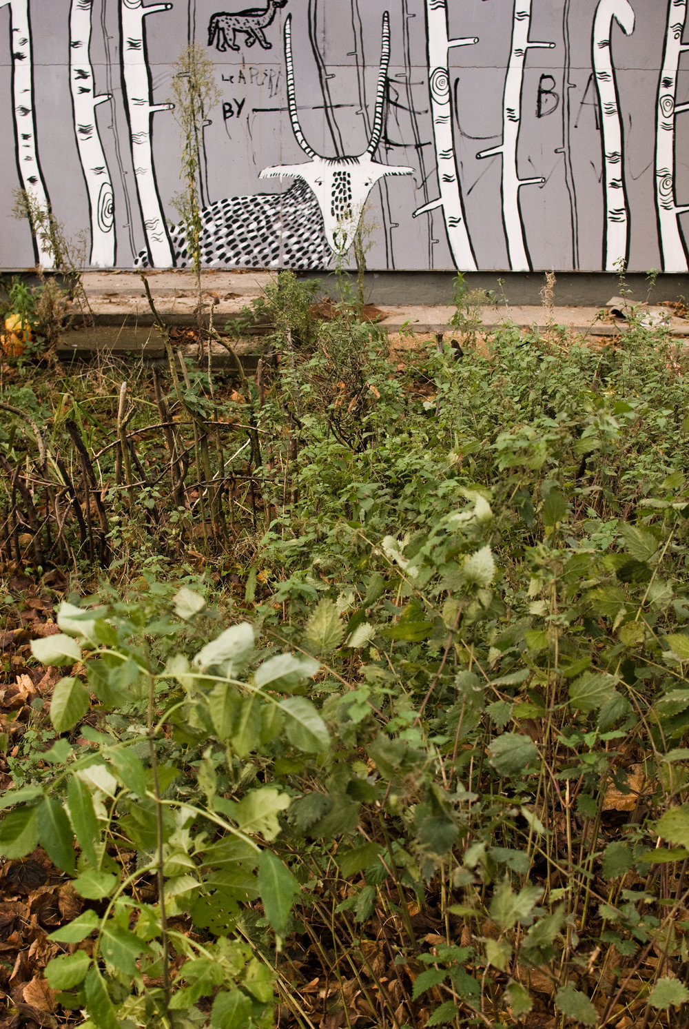 Georgina_cook_Heygate_estate_wildlife_garden.jpg