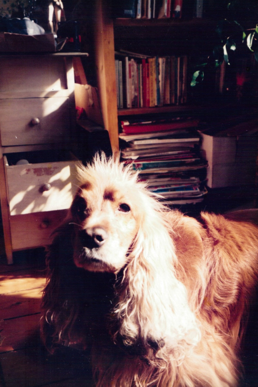 GeorginaCook_memory_milo_scans_dog.jpg