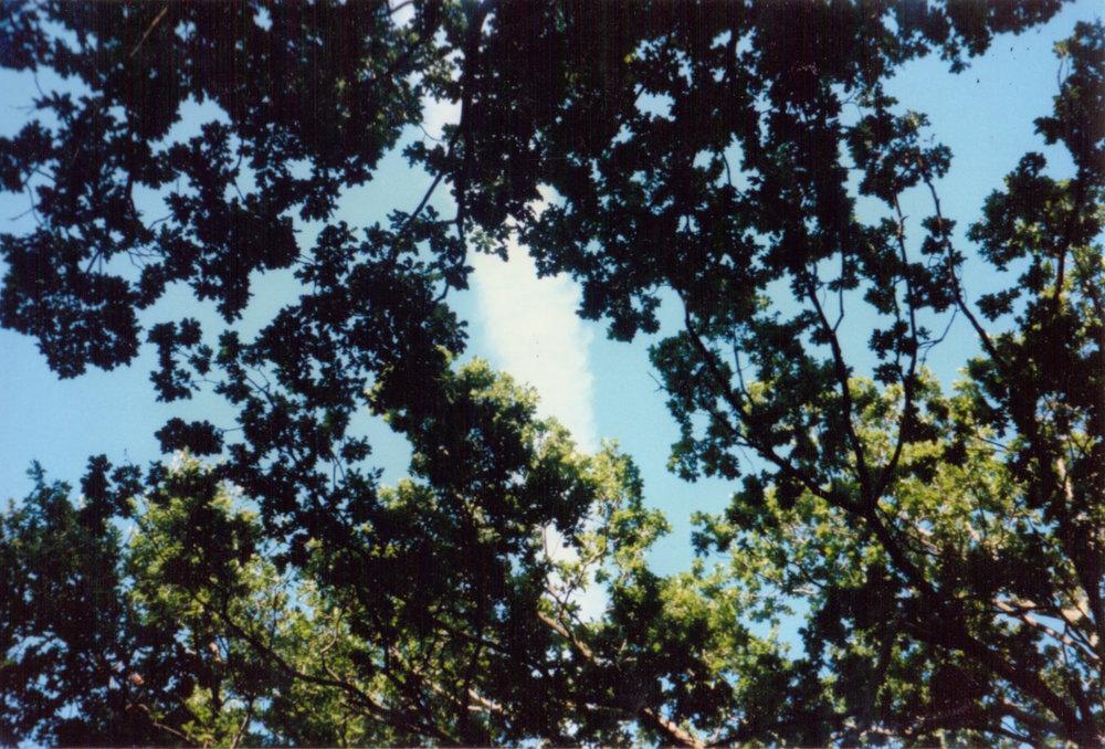 GeorginaCook_memory_scans_grangewood_trees.jpg
