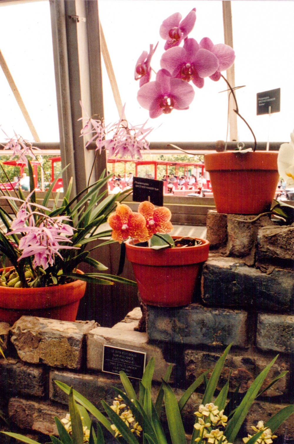 GeorginaCook_memory_scans_orchids_photo_film.jpg