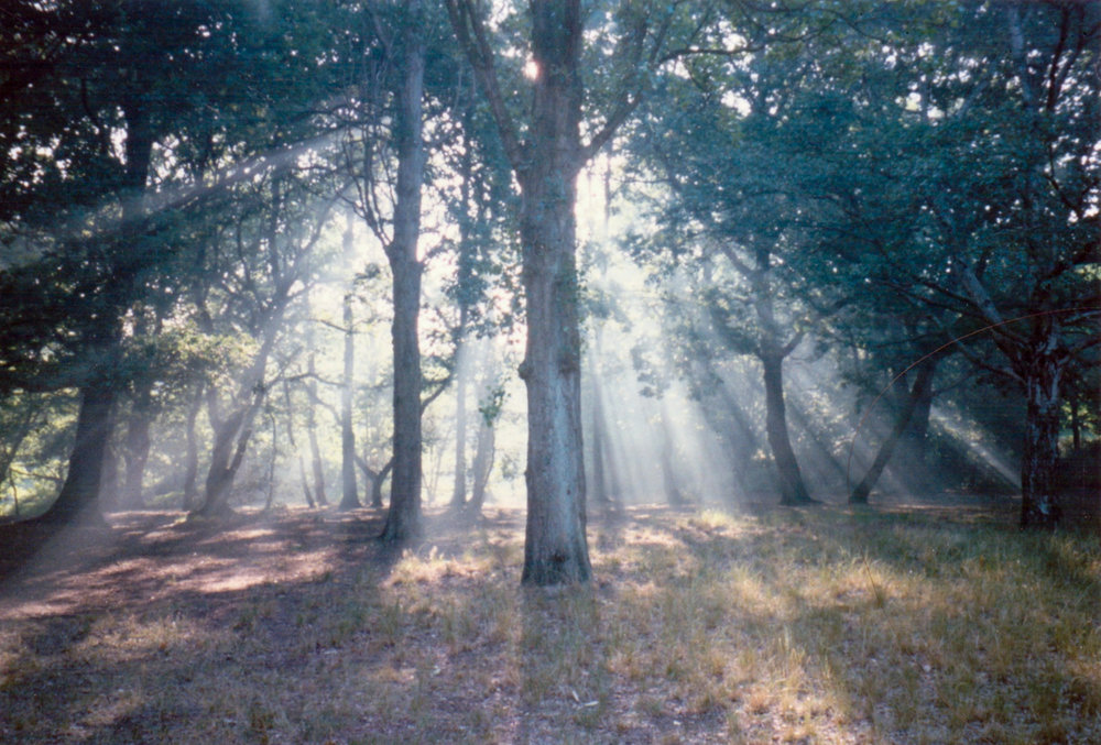 GeorginaCook_memory_scans_streatham__woods_photo_film.jpg