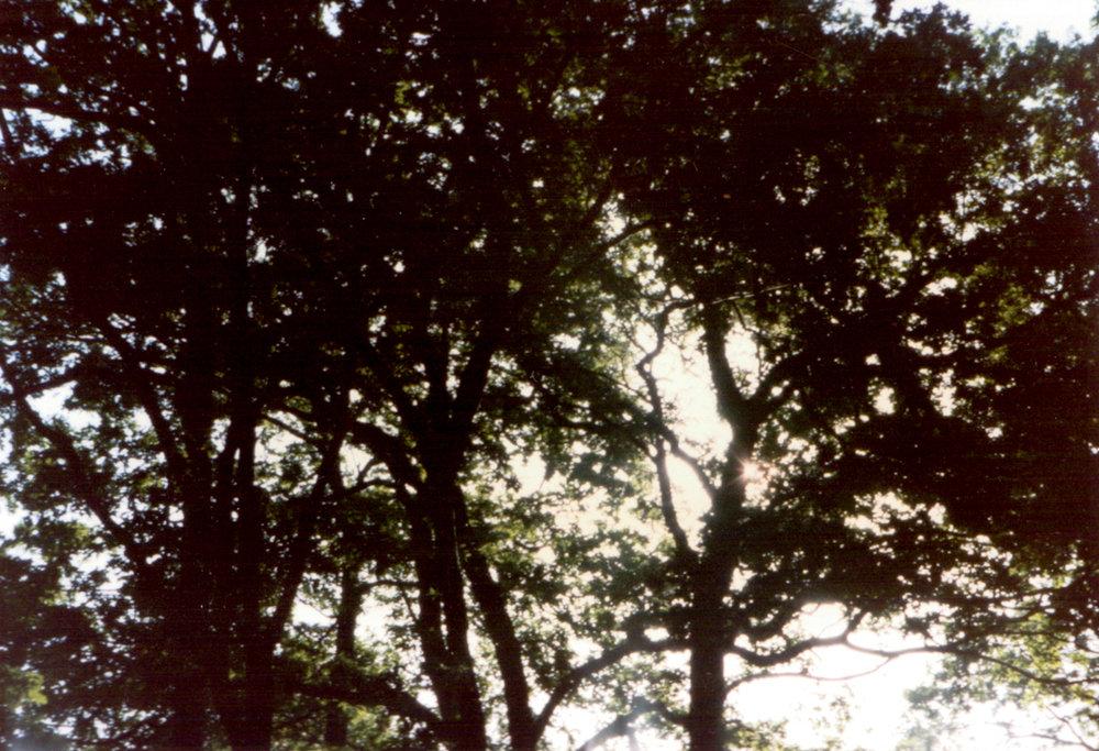 GeorginaCook_memory_scans_streatham_tree_film.jpg