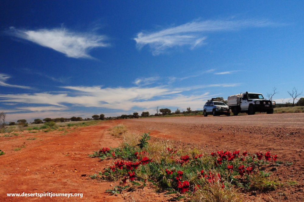 Desert Pea with sky and road - Rich Read.jpg