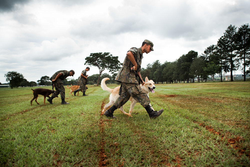 Brazil: Training Dogs of War
