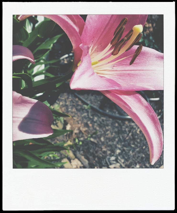 flowerpolaroid