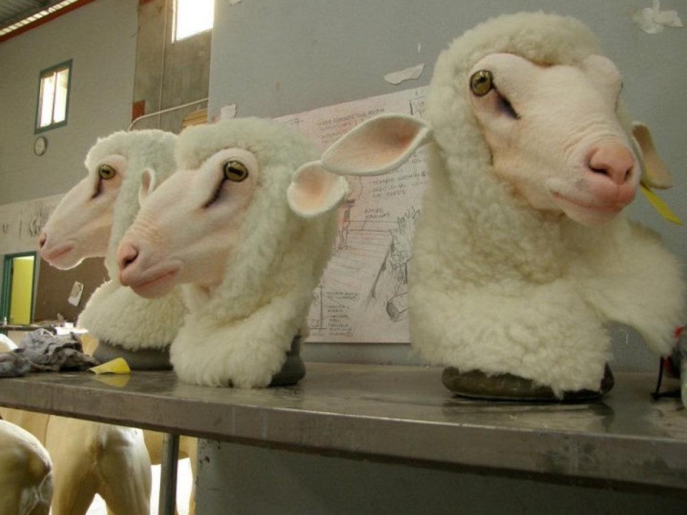 WA Ballet Sheep Masks