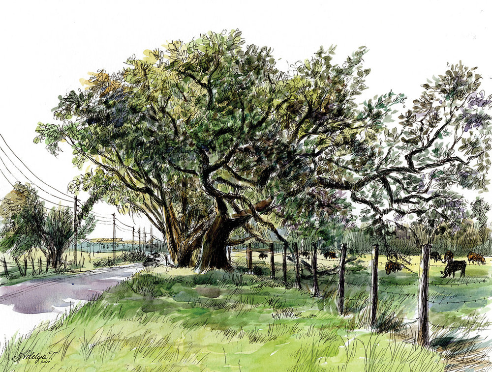 Adelya_Tumasyeva_watercolor_pleinair_tree1.jpg