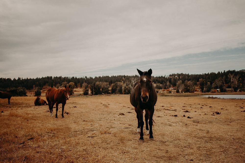 cattle-barn-wedding-cle-elum-wedding-megan-gallagher-photography-winston-salem-photographer (49).jpg