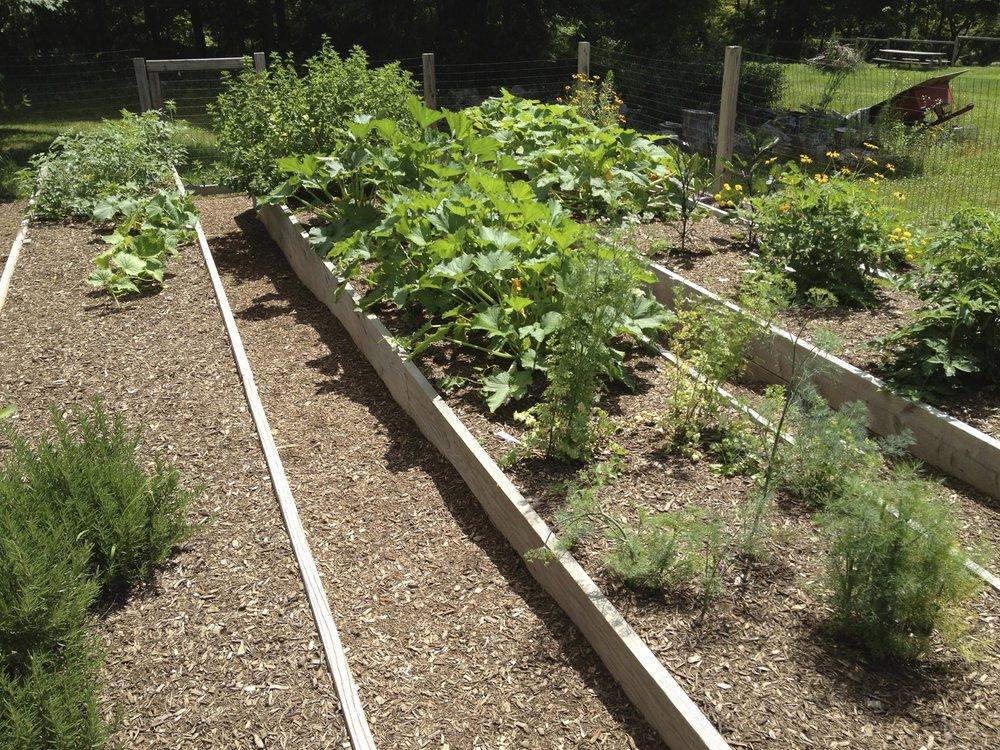 garden-status-since-last-blog1.jpg