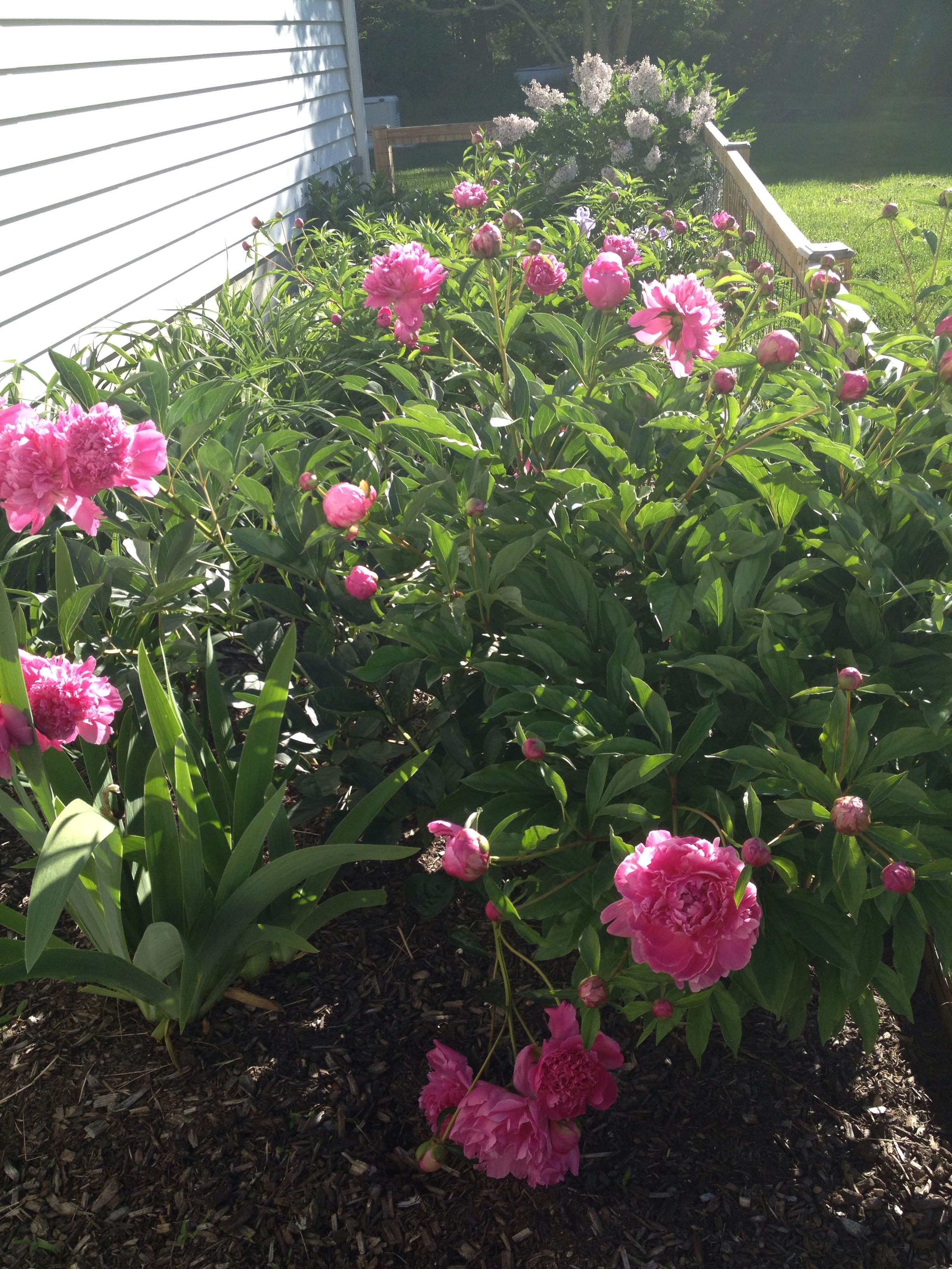 Fragrant Spring peonies.  I miss Spring already.