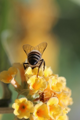 Bee on Flower.jpg