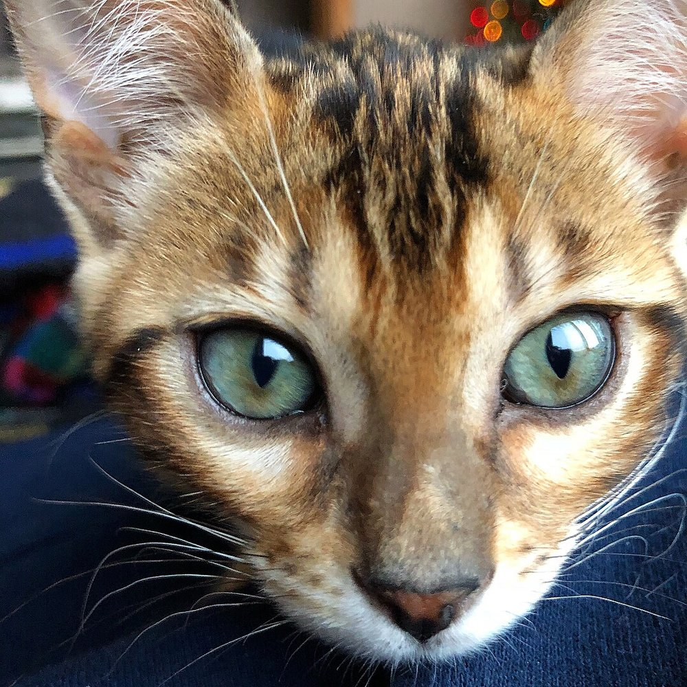 She has the prettiest soft green eyes.