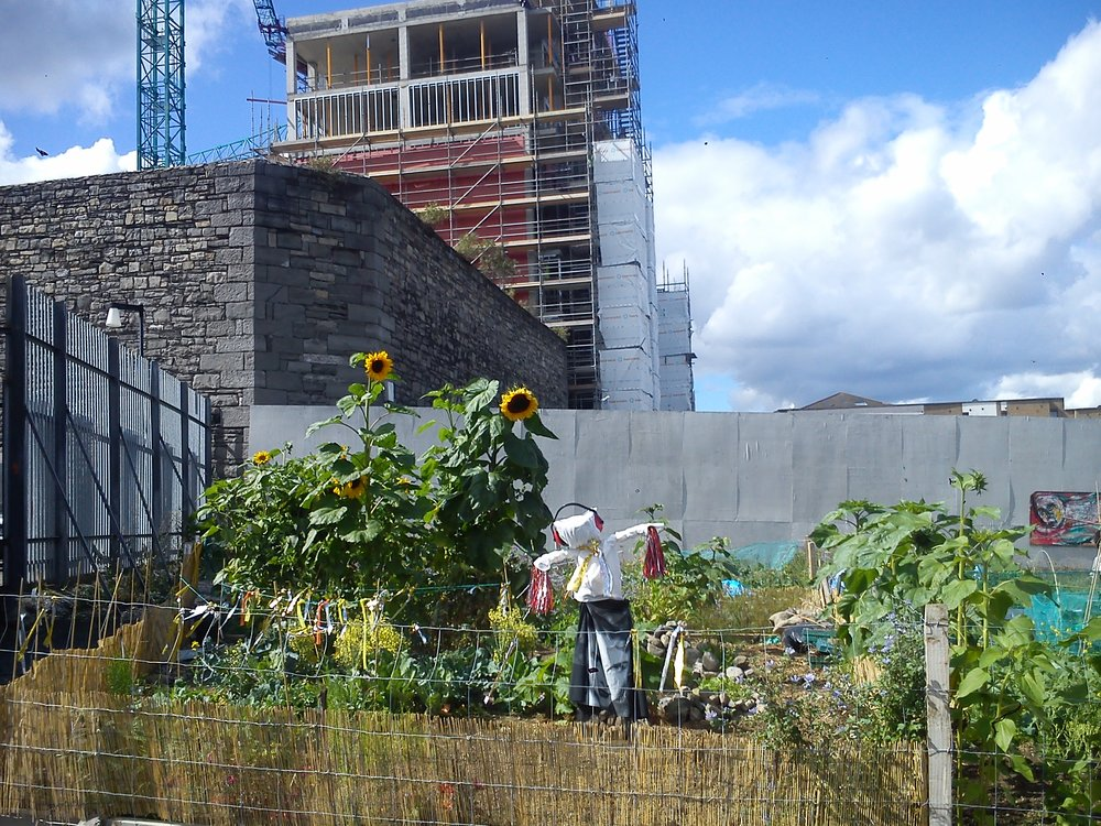 Bridgefoot Street Garden   https://twitter.com/dublin_shed    Click Here to see Gallery.