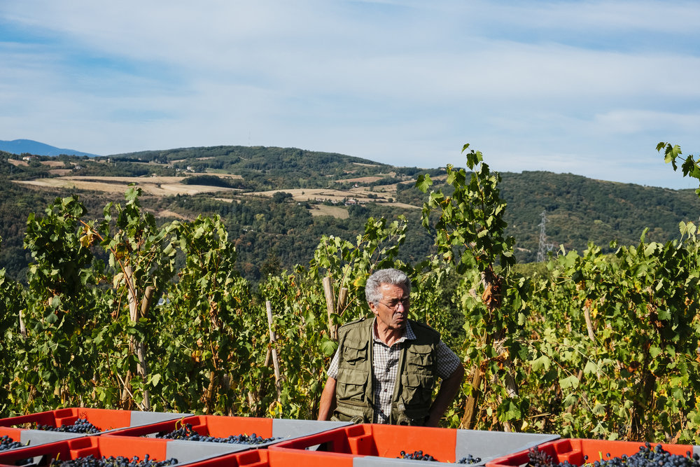 VENDANGES SMALL_12.jpg