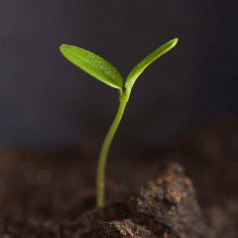 seedling2..jpg
