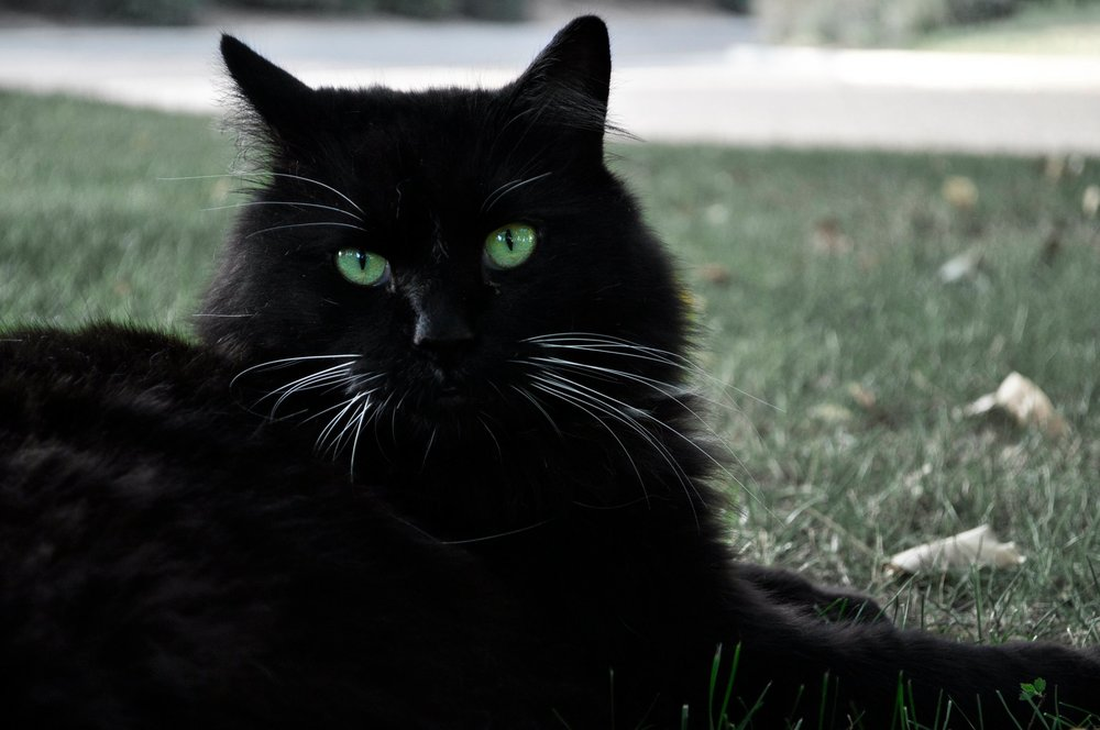 green_eyes_for_black_cats_by_nativekokopelli-d3ezdwx.jpg