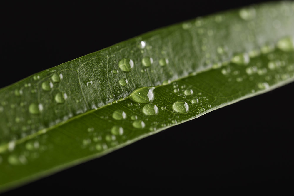 Green Leaf on Black.jpg