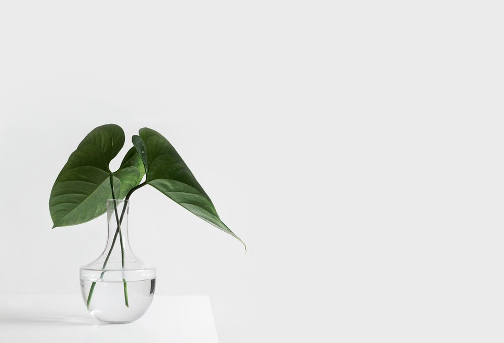 Plant on white wall
