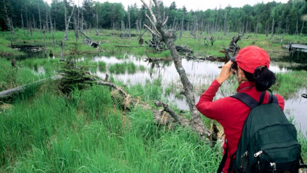 67051-01208 Mollie Matteson scans for wildlife near Griffith Lake Green Mountain NF Vermont George Wuerthner-2382.jpg