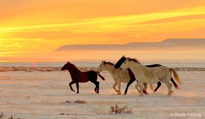 Wild Horses_Deeb Young.jpg