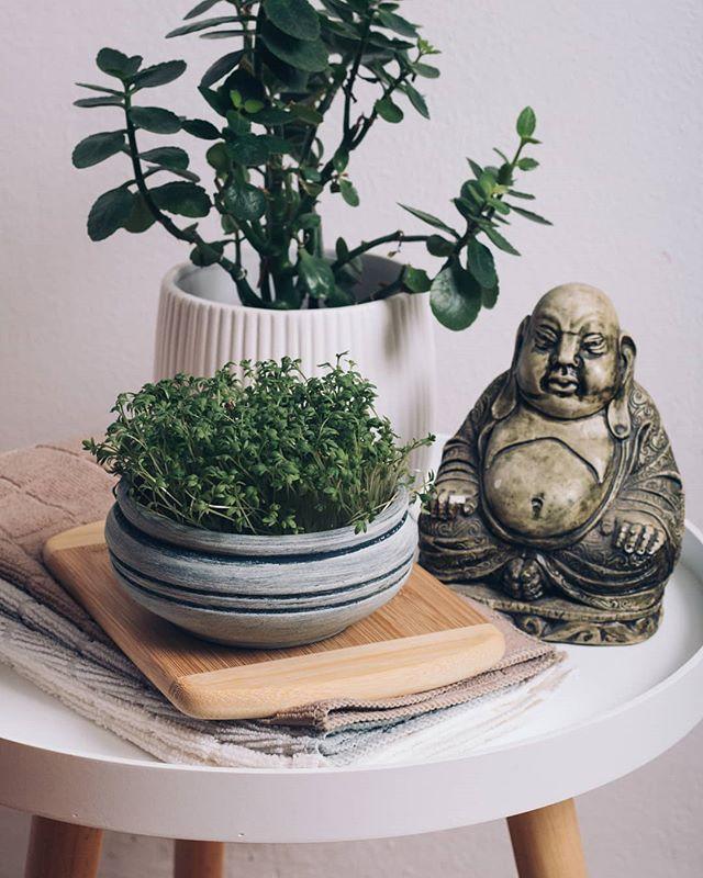 • Nedelja 🍐• . . . #mikrobilje #microplants #microplante #recepti #hrana  #foodphotography #recepti #kuvamososmehom #buda #biljke #cvece #nedelja #priroda #ayurveda #yoga