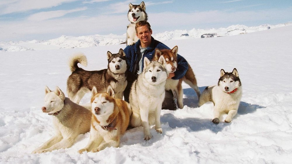 Eight Below -